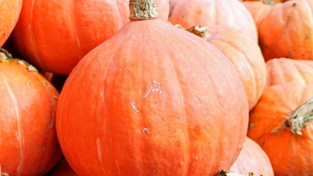 pumpkins-469593_960_720