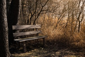 bench-1190768_960_720