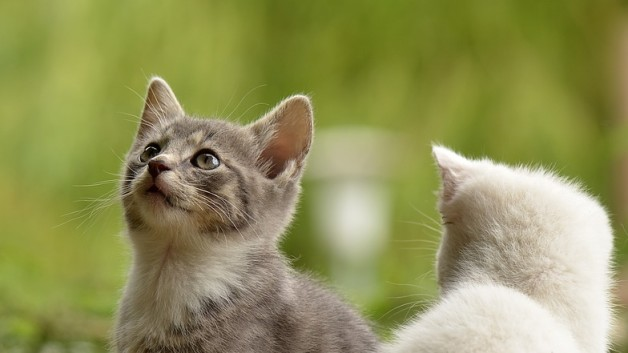 cat-2273598_960_720