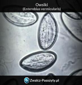 Owsiki