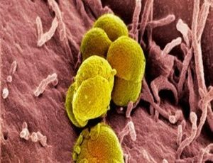 Bakteria rzeżączki