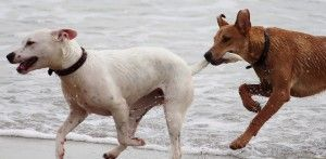 dogs-708354_960_720