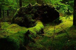 forest-483207_960_720